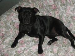 This is Daisy (Axlstaff Lady Luck) she is holley's litter sister from 2007