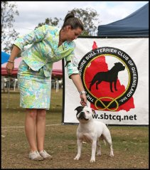 Thank you so much Suzie Ryan for showing Gomez on this day at our Stafford specialty show Qld, August 2014. He placed 4th both days under two UK judges,