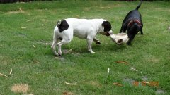 Gomez and his mum Holley playing around the yard, he is 4.5yrs old.