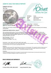 Adalita's DNA Parentage Certificate