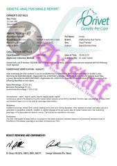 Honey's DNA Parentage Certificate